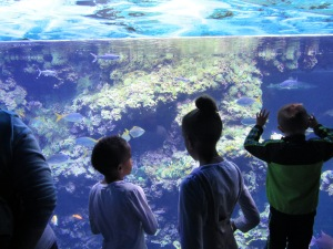 We loved the Oceanographic Museum